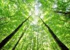 Drzewa jak cz�owiek - te� zasypiaj�. Naukowcy odkryli, �e noc� opadaj� im ga��zie