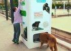 Wyrzucając śmieci, karmisz bezdomne zwierzęta. Turcy wymyślili, jak pomóc bezpańskim psom
