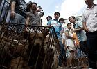 Czy to koniec festiwalu psiego mięsa w Yulin? Lokalne władze zakażą w tym roku handlu nim