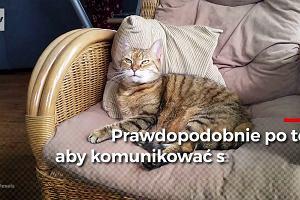 Czy wiesz, dlaczego koty mruczą? Nie zawsze chodzi o to, że są zadowolone