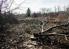 Wycięli 3 ha drzew na terenie politechniki. Będzie trawnik