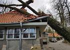 Drzewo spadło na dach wyremontowanego akwarium w Zoo