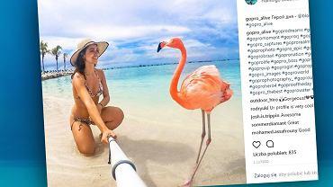 Luksusowy resort na Bahamach poszukuje do pracy... opiekuna flamingów.