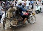 Chińska emerytka walczy z amatorami psiego mięsa i buduje schroniska