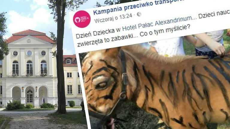 Hotel Pałac Alexandrinum przeprasza po zabawie z malowaniem zwierząt
