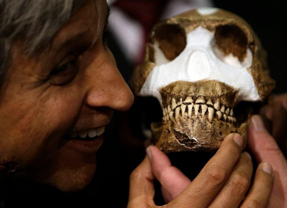 Zdjęcie numer 1 w galerii - Homo naledi. Jak odkryto nowy gatunek człowieka.