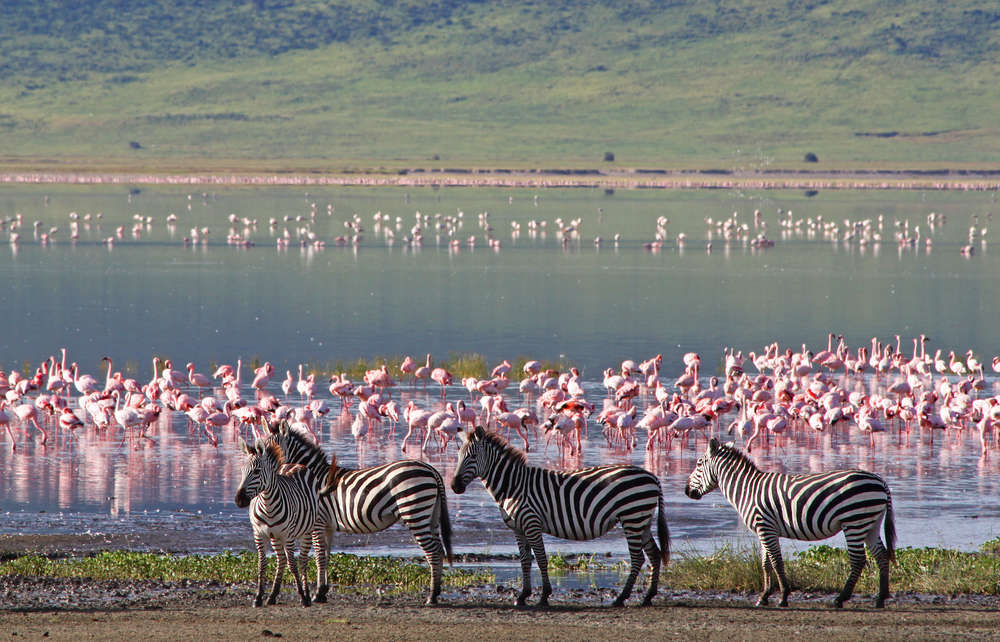 Afryka Tanzania - Park Narodowy Serengeti