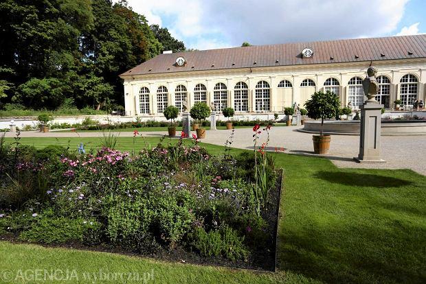 Łazienki Królewskie. Holenderski Ogród Kwiatowy w Starej Oranżerii zachwyca