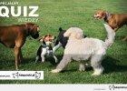 Quiz wiedzy o psach: omówienie prawidłowych odpowiedzi