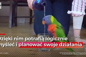 Wcale nie ptasie móżdżki. Papugi bez problemu radzą sobie z łamigłówkami