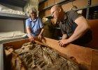 Muzealne magazyny kry�y niesamowite znalezisko. Chodzi o ludzki szkielet sprzed 6,5 tys. lat [ZDJ�CIA]