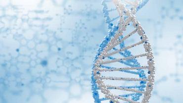 Mutacja w obrębie genu oznaczonego skrótem BRCA 2 zwiększa ryzyko wystąpienia choroby nowotworowej