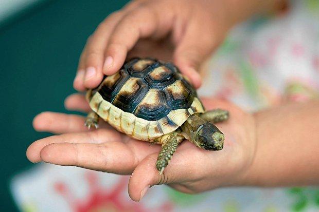 SONY DSC SLOWA KLUCZOWE: Italien Reise Sardinien Schildkröte Sommer ZEltplatz