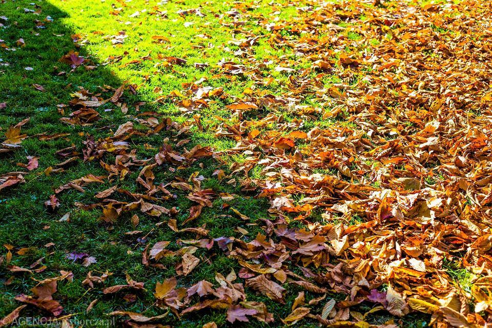 Piękna Słoneczna Jesień W Krakowie Taka Pogoda Jeszcze Przez Kilka