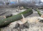 Wycięte drzewa przy ulicy Nehru. Luty 2017 r.
