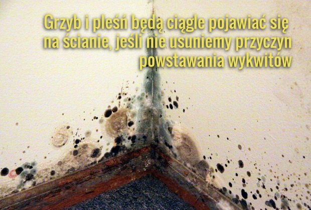 Grzyb w domu. Co zrobić z zagrzybioną ścianą lub podłogą?