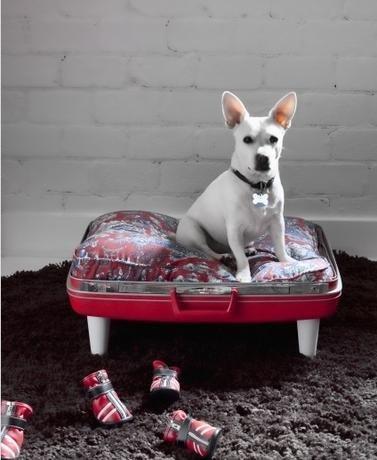 Legowisko dla psa z walizki, co zrobić ze starą walizką, jak wykorzystać starą walizkę, Pomysł na starą walizkę, drugie życie rzeczy, ekomeble, vintage,