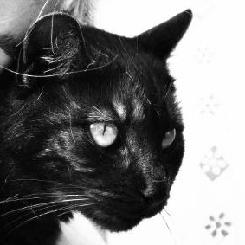 czarna_pumka avatar