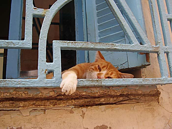 Tunezyjskie Koty Zdjęcia Na Fotoforum Gazetapl