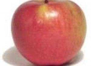 Owocowy Raj  (przepis dla pan�w)