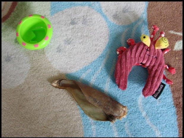 Od psa dla niemowlęcia / fot. Olga Wróbel