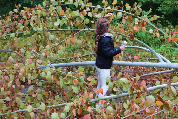 Zamiast karuzeli - przewrócone drzewo (fot. Ania Oka)