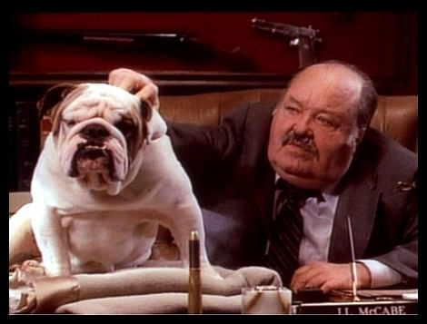 Pies i prokurator