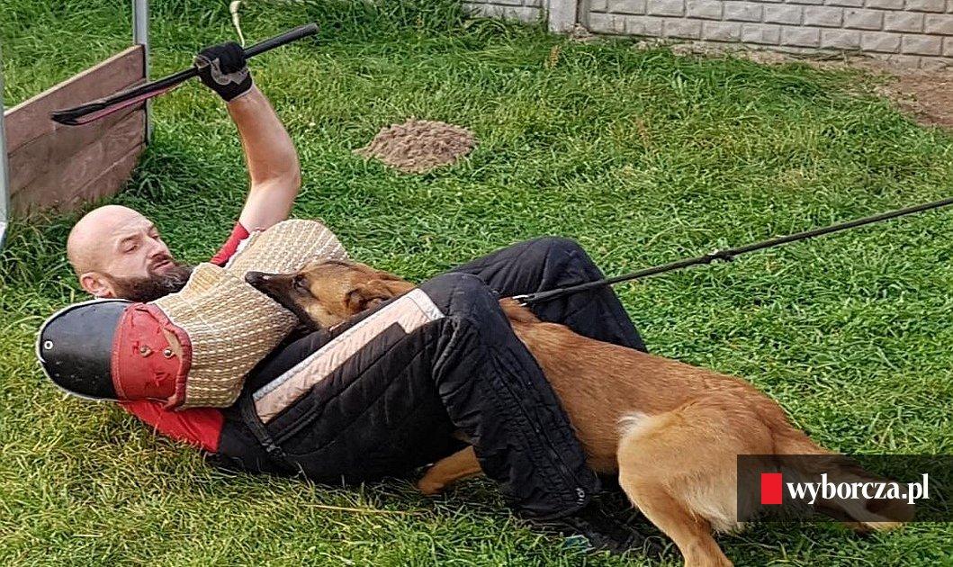 Wybitny Szukają psów do policji. Właściciel może dostać nawet 12 tys. zł QU34