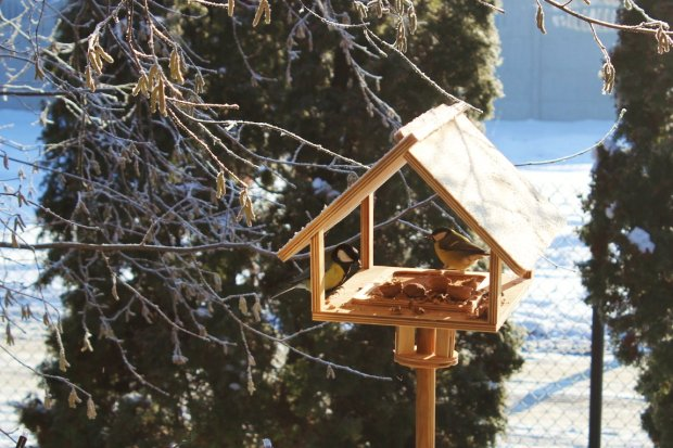 Ptaki najprzyjemniej dokarmiać we własnoręcznie zrobionym karmniku