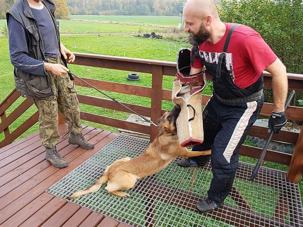 Wspaniały Szukają psów do policji. Właściciel może dostać nawet 12 tys. zł MU27