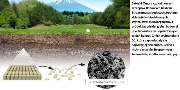 Satoshi Omura szukał nowych szczepów tlenowych bakterii Streptomyces będących źródłami składników bioaktywnych. Wyizolował mikroorganizmy z próbek japońskiej gleby, hodował je w laboratorium i opisał tysiące takich kolonii. Z nich wybrał około 50, które zapowiadały się najbardziej obiecująco. Jedna z nich to właśnie Streptomyces Avermitillis, źródło awermektyny.