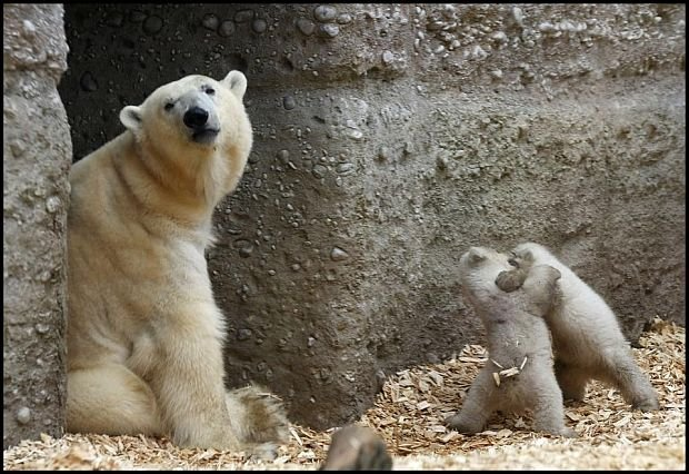 Pani misiowa, jak ja panią rozumiem (zdjęcie pochodzi z http://www.buzzfeed.com/)