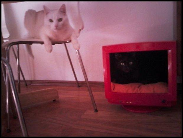 Domek dla kotów - zrobiłam z monitora komputerowego