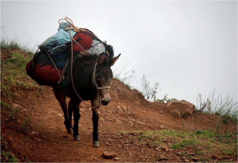 Transport towarów w Andach, 2013 rok