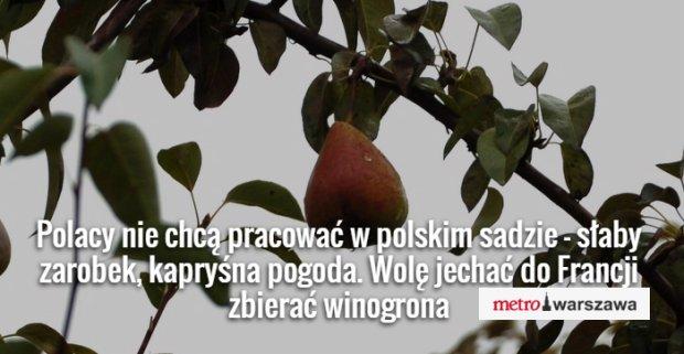 Polski sad