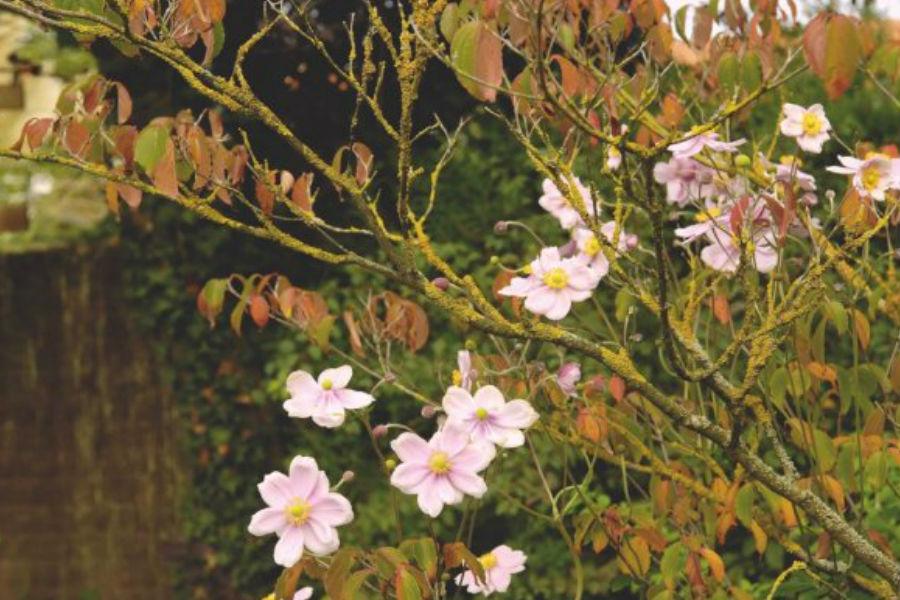 Aranżacje ogrodów - jakie dodatki