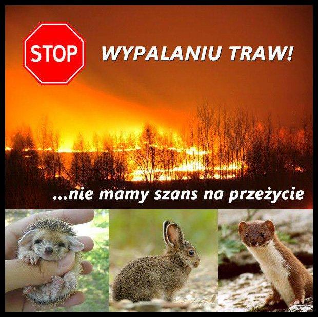 www.www.nowa-wies-kety.pl/stop-wypalaniu-traw-film/