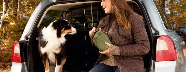 Przewóz zwierząt   Jak pies z kierowcą