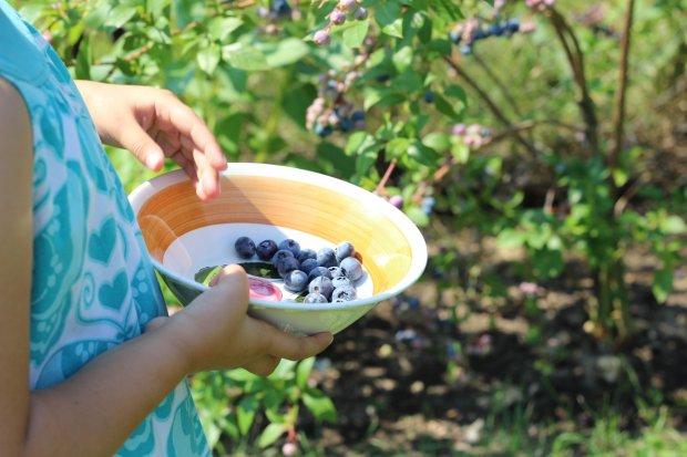 A może owoce z własnej uprawy? (fot. Ania Oka)