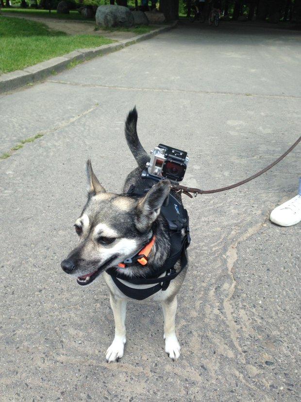 Essie, pies z kamerą zrobił film o Warszawie