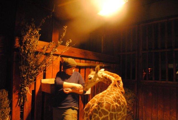 Żyrafek ze swoją opiekunką.