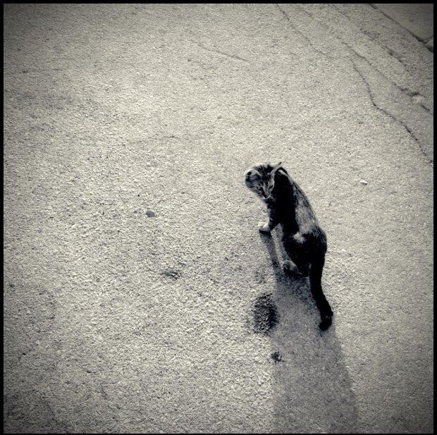 Kot w Chorwacji jakiś taki bardziej fotogeniczny?