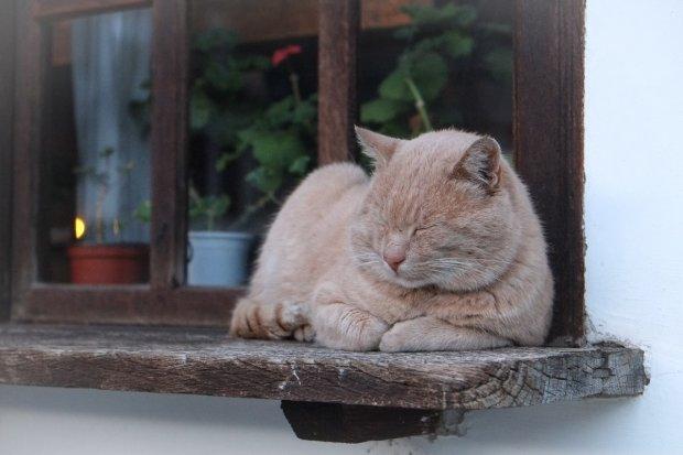 Być kotem i sobie spać, gdzie się tylko zachce / fot. Unsplash.com