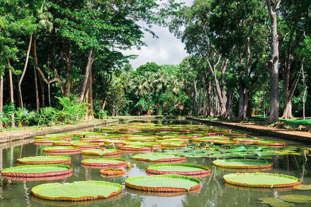 Ogród botaniczny Pamplemousses na Mauritiusie (fot. Mlenny / iStockphoto.com)