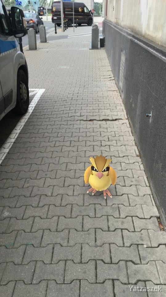 Pokemony w Warszawie