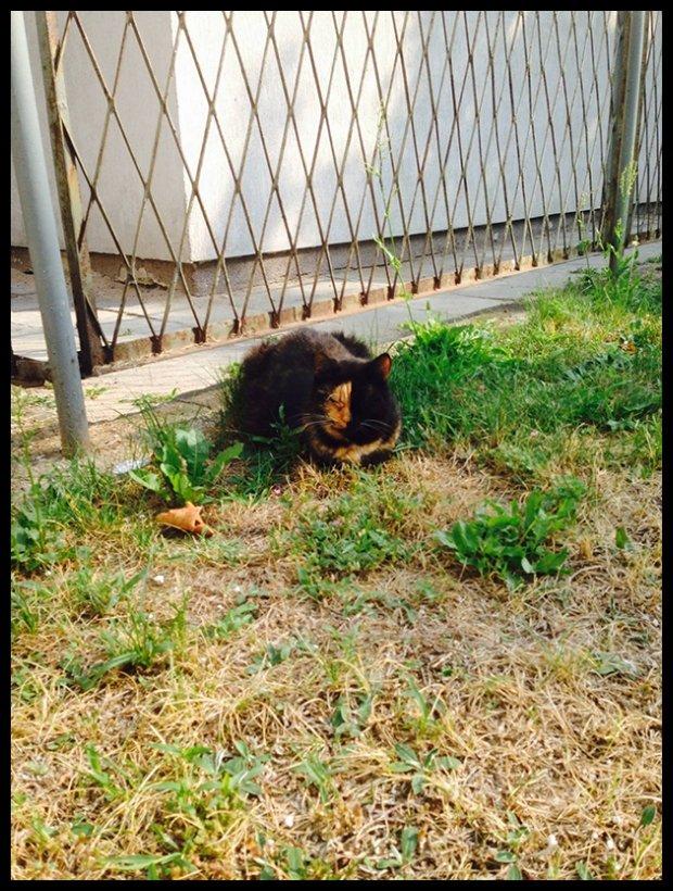 W szpitalu tymczasem pocieszała mnie piękna kotka (fot. Miss Olgu)