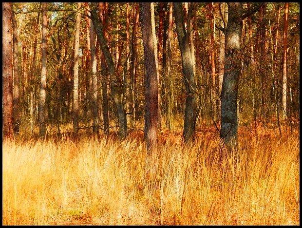 Lasy koło Radłowa
