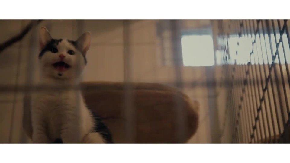 W superbly Są niezwykłe i bardzo potrzebują domu: koty ze schroniska [WIDEO] OV55
