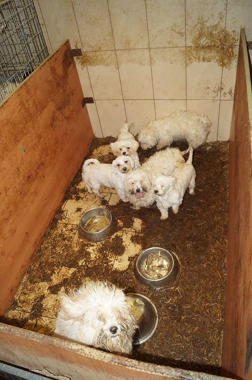 Inne rodzaje Koniec śledztwa w sprawie nielegalnej hodowli psów. Jest akt QX33