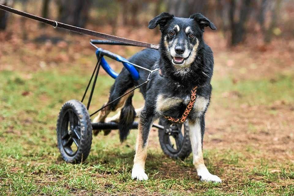 Zaktualizowano Wakacje - czas pozbyć się psa? Latem porzucamy nawet 40 proc FI17
